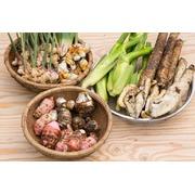 季節の無農薬野菜セット(少量) 季節の味をお届けします!